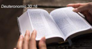 Deuteronomio 30:16